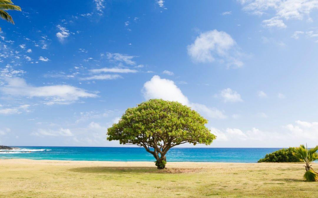 Pour lutter contre la chaleur, plantez des arbres